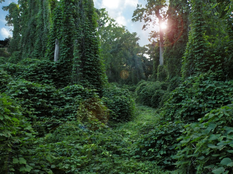 Internalizing feelings can be like kudzu vines taking over the South! via https://teresatysinger.com