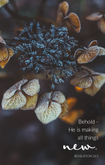 """Behold - He is making all things new."" Revelation 21:5