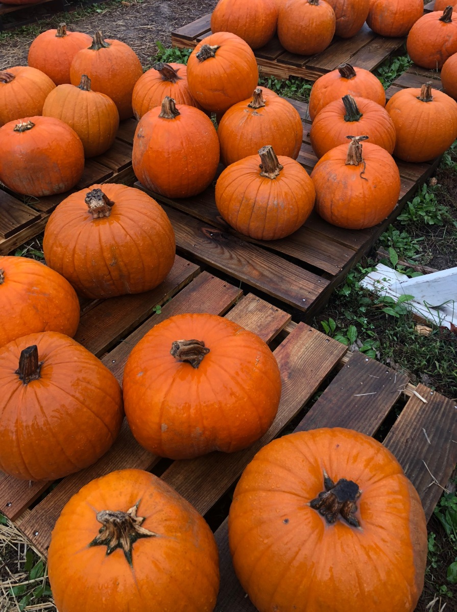 I Must Be Crazy: NaNoWriMo and Other Fall Things